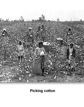 Jackson Farming 02 Picking Cotton