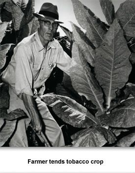 CR Agriculture 03 Farmer tending tobacco