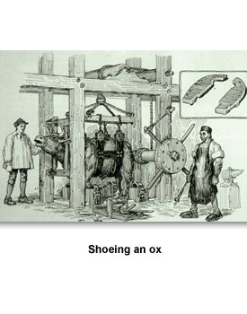 Merchants & Industry 03 Shoeing an ox
