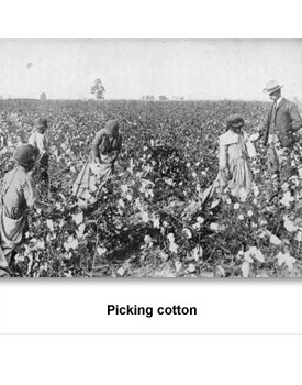 Confronting Living 04 Picking Cotton