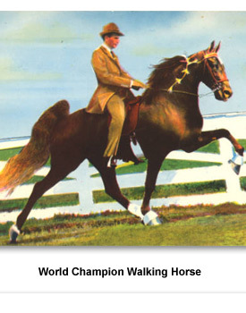 CR Agriculture 05 Walking Horse