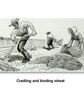 Working on the Farm 06 Cradling and binding wheat