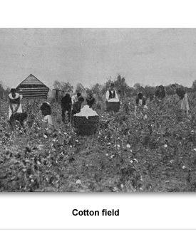 Confront Home 07 Cotton Field
