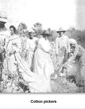 Confronting Racial 08 Cotton Pickers
