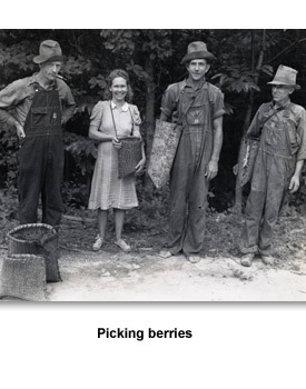For Farmers 05 Berry pickers