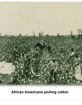 Confront Populism 04 AAs Picking Cotton