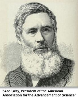 Science and Medicine Asa Gray