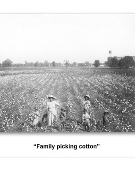 Confront Populism 01 Fam Picking Cotton
